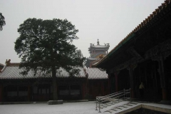 Forbidden City Tower View